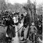 Les ramasseuses de bois