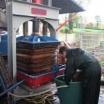 Le jus est extrait par pressage (350 kg/cm²)et filtré
