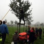 """Récolte des pommes au verger communal pour l'opération """"jus de pomme"""""""